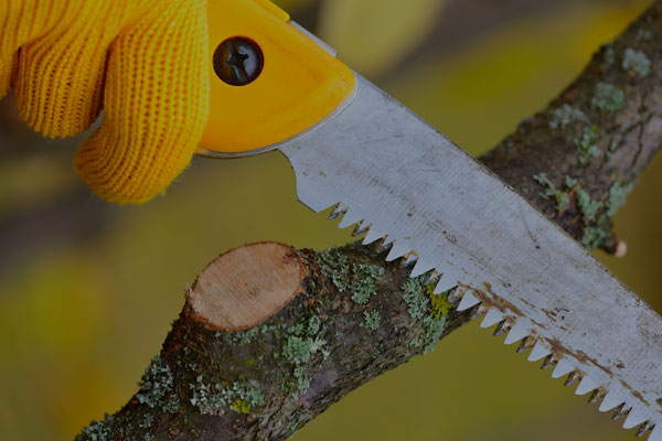 Close up of hand saw from Brushking | Tree Shaping and Pruning Solutions Christmas Tree Knives